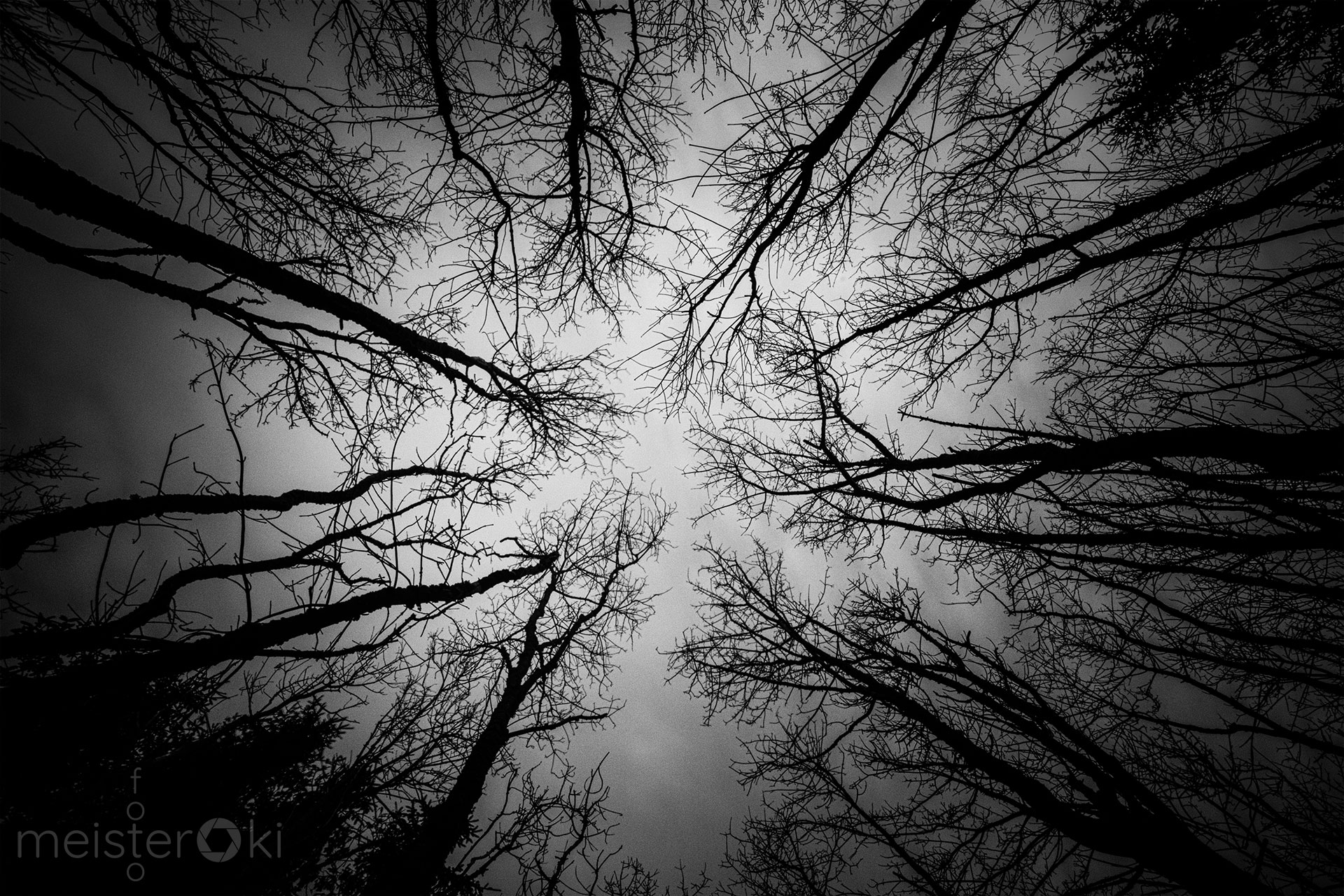 Trees_SW